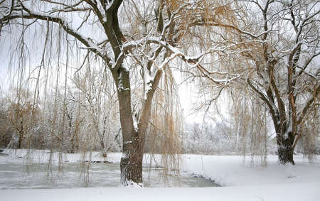 Winter Landscape Stock Photo - 2316490