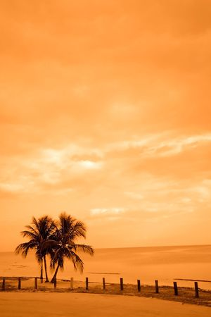 Two Palm Trees By The Ocean photo