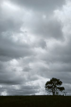 Single tree with cloudy sky background in blue color tone