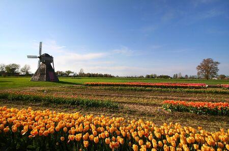 dutch: Windmill and dutch tulip gardens