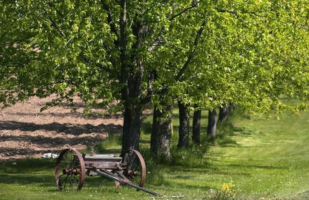 trolly: Old trolly in front of rows of trees -rural scene Stock Photo