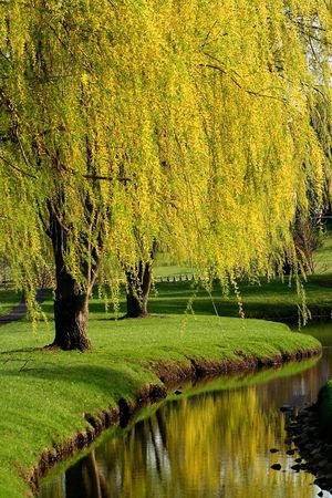 weeping: Michigan Park During Spring Time Stock Photo