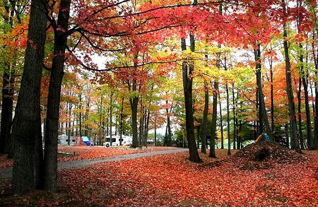 fallcolours: Michigan Landscape Stock Photo
