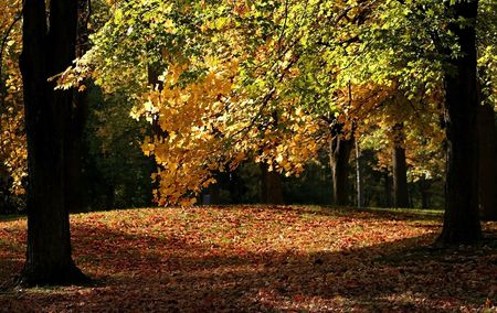 fallcolours: Early Autumn Time In A Park