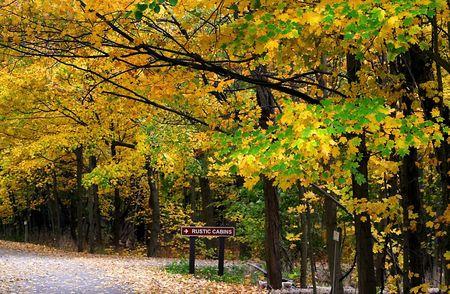 fallcolours: Colorful Trees