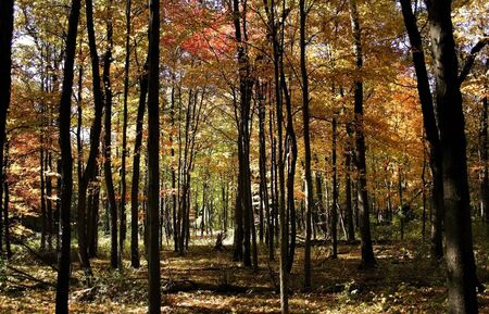 fallcolours: Tall Colorful Trees In A Park Stock Photo