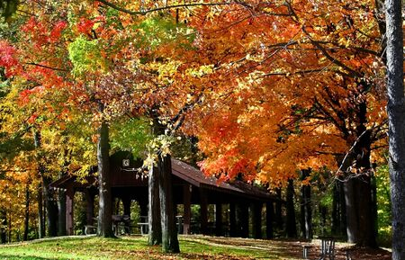 fallcolours: Autumn trees in a beautiful Michigan state park