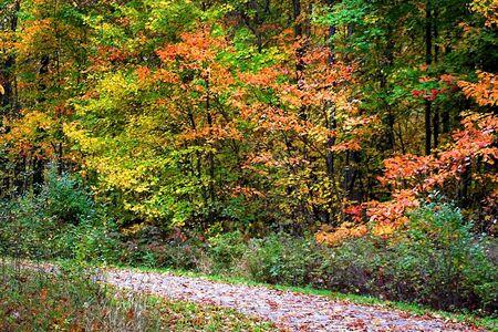fallcolours: Walk Way In A Park