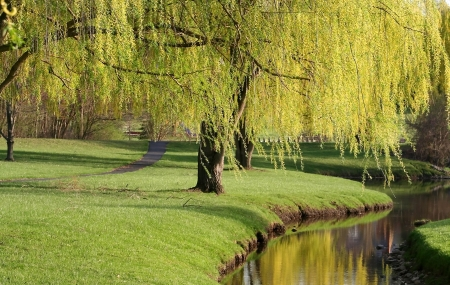 willow: Willow Trees Stock Photo