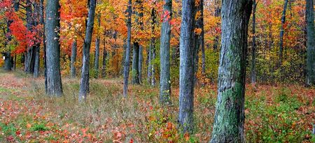 fallcolours: Autumn Banner