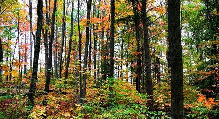 fallcolours: Tall Colorful Trees
