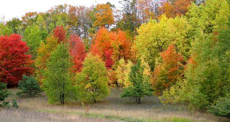 fallcolours: Colorful Autumn Trees Stock Photo