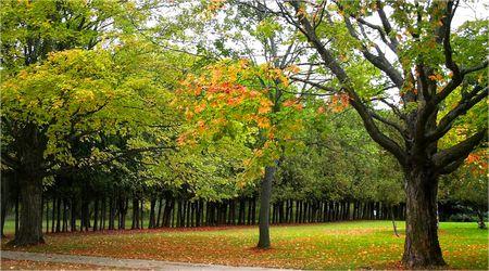 fallcolours: Scenic Landscape