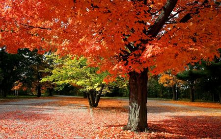 fallcolours: Scenic Autumn Time Stock Photo