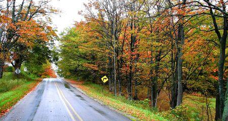 fallcolours: Autumn Drive