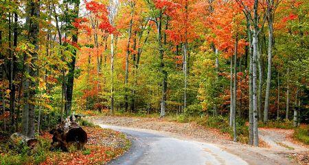 fallcolours: Autumn Panorama