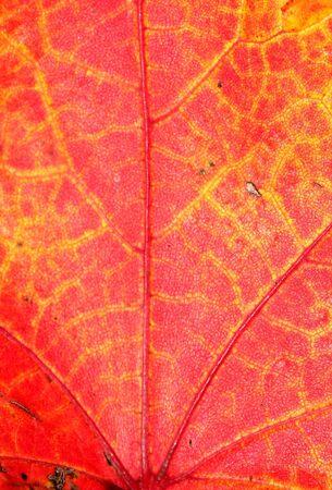 Leaf Background 版權商用圖片