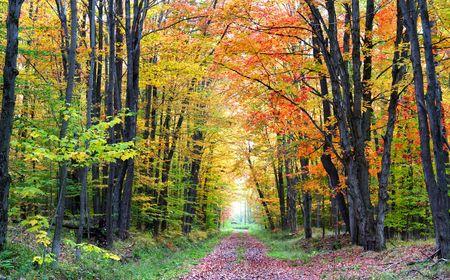 forest path: Autumn Walk Way