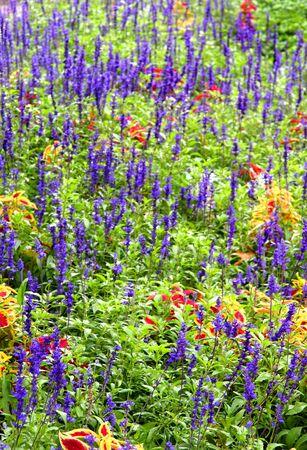 dainty: Flower Garden