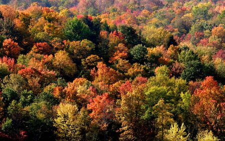 Colorful Trees Stock Photo - 3715404