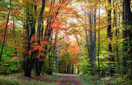 walking trail: Scenico Walking Trail Archivio Fotografico