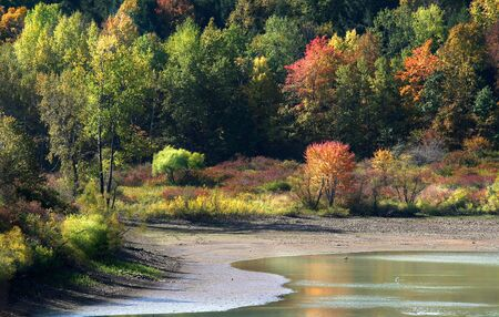 allegheny: Autumn In Allegheny Forest