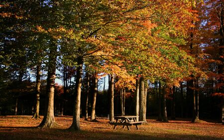 allegheny: Colorful Fall Trees Stock Photo