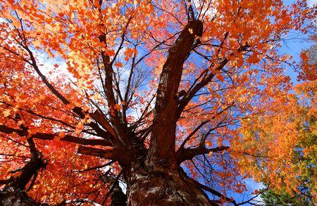 Colorful Tree photo