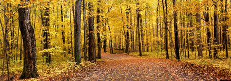 fall of leafs: Autumn Panorama