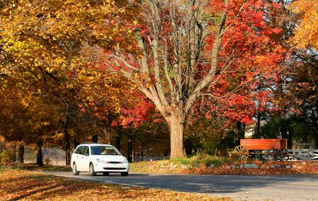 Bright colored trees during autumn time in Michigan Stock Photo - 3844610