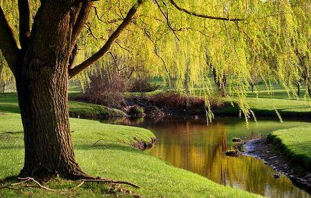 willow trees: Scenic Landscape