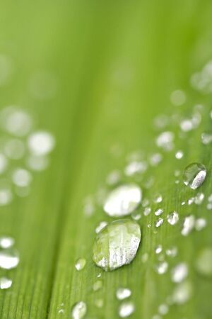 Water Drops On A Leaf photo