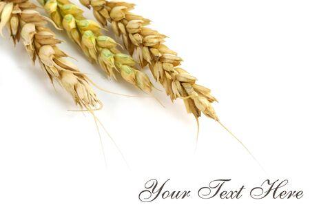 Wheat Post Card Фото со стока