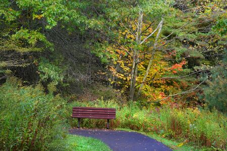 Single Bench In The Forest photo