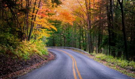 autumn colour: Beautiful Autumn Drive Stock Photo