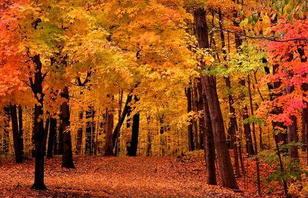 autumn colour: Autumn Landscape