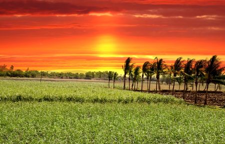 Paddy field in India against bright red skies Stock Photo - 5350131