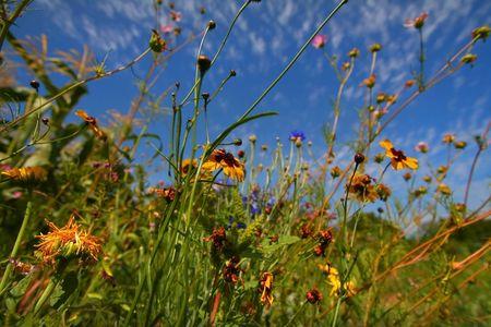 Flower Garden Stock Photo - 5349987