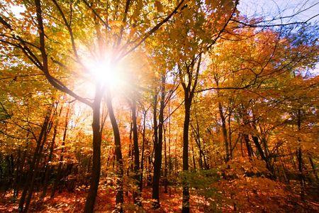 autumn colour: Autumn Sun Raise