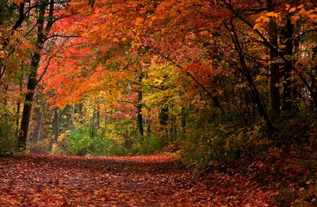 fallcolours: Autumn Landscape