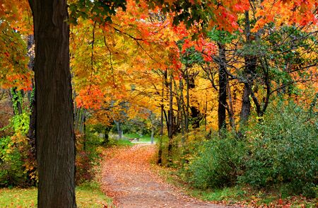 fallcolours: Colorful Autumn Scene Stock Photo