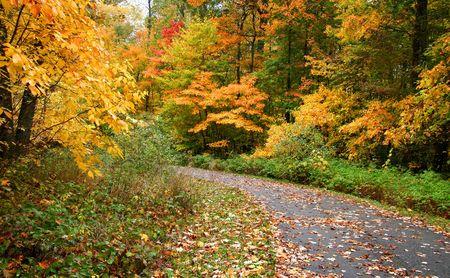 fallcolours: Fall Landscape