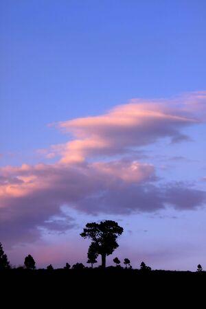 Single Tall Tree Stock Photo - 5382671
