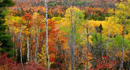 Beautiful autumn landscape photo