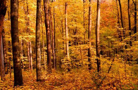 fallcolours: Autumn forest Stock Photo