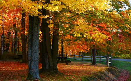 michigan: Bright autumn colors
