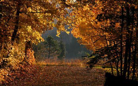 Bright autumn colors Stock Photo - 5543074