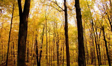 Bright autumn colors Stock Photo - 5543078
