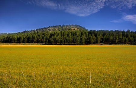 Farm landscape Stock Photo - 5543135