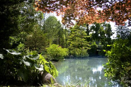 Small pond in the Japanese garden photo